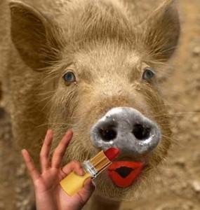 """It´s still a pig"". B. Obama."