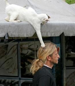 Katt i ferd med å skrape fletta av noen.
